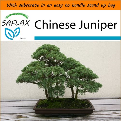 SAFLAX Garden in the Bag - Bonsai - Chinese Juniper - Juniperus - 30 seeds