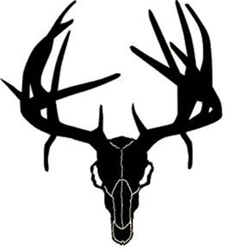 Western Recreation Ind 9308 Buck Skull with Drop Tines 6X6
