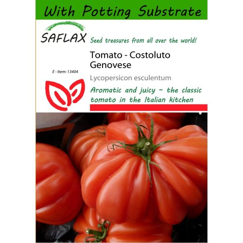 Saflax  - Tomato - Costoluto Genovese - Lycopersicon Esculentum - 10 Seeds - with Potting Substrate for Better Cultivation