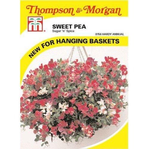Thompson & Morgan - Flowers - Sweet Pea Sugar N Spice - 25 Seed