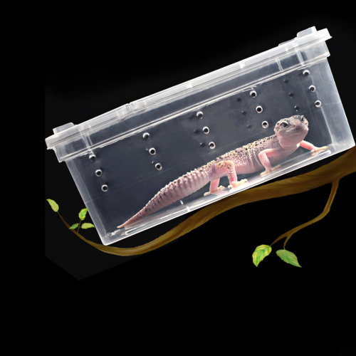 Plastic Insect Reptile Feeding Case
