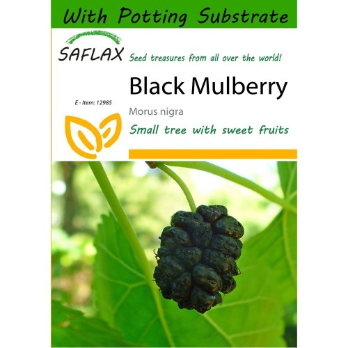 Saflax  - Black Mulberry - Morus Nigra - 200 Seeds - with Potting Substrate for Better Cultivation