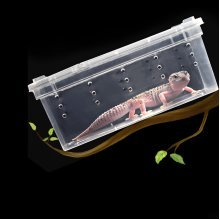 Plastic Insect Reptile Feeding Case