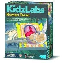 Human Torso Kidz Labs - 4M