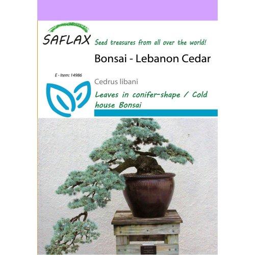 Saflax  - Bonsai - Lebanon Cedar - Cedrus Libani - 20 Seeds
