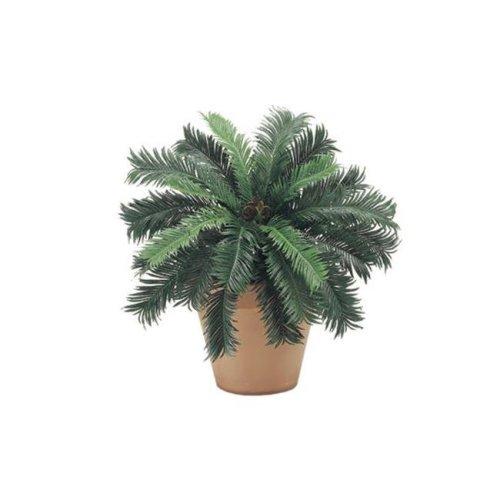 PBP025- 22 in. Cycas Palm Bush X25, 6 Each