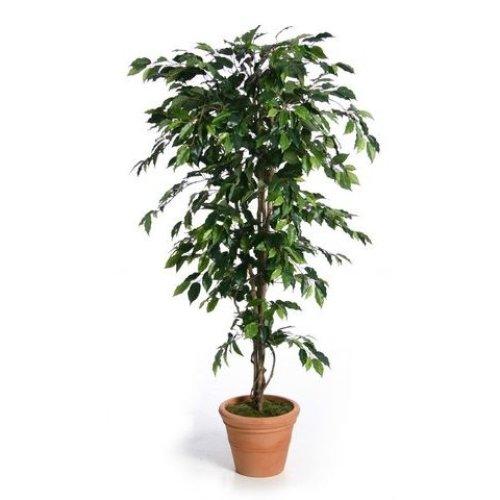 Artificial Silk Fat Ficus Tree