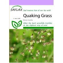 Saflax  - Quaking Grass - Briza Media - 75 Seeds