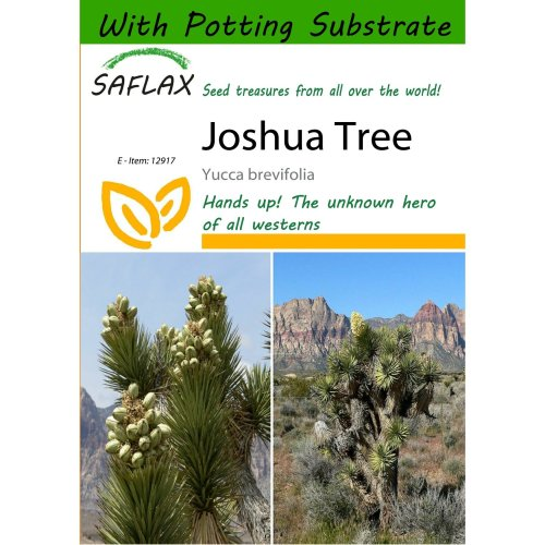 Saflax  - Joshua Tree - Yucca Brevifolia - 10 Seeds - with Potting Substrate for Better Cultivation