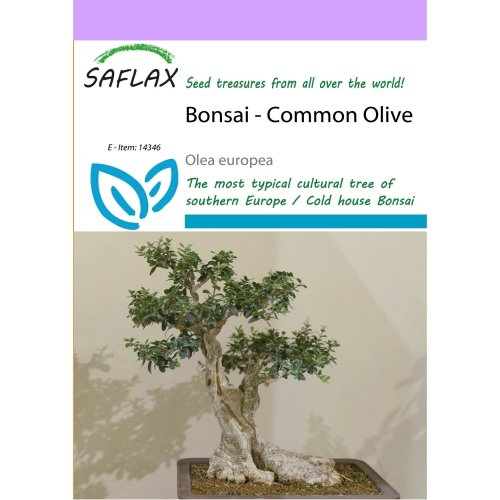 Saflax  - Bonsai - Common Olive - Olea Europea - 20 Seeds