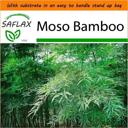 SAFLAX Garden in the Bag - Moso Bamboo - Phyllostachys - 20 seeds