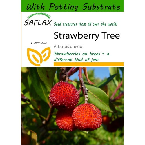 Saflax  - Strawberry Tree - Arbutus Unedo - 50 Seeds - with Potting Substrate for Better Cultivation
