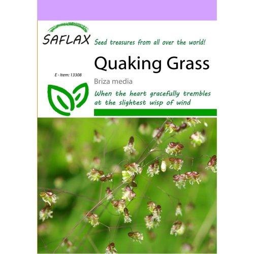 Saflax  - Quaking Grass - Briza Media - 75 Seeds