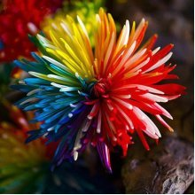 20Pcs Rainbow Chrysanthemum Flower Seeds Rare Color Home Garden Bonsai Plant