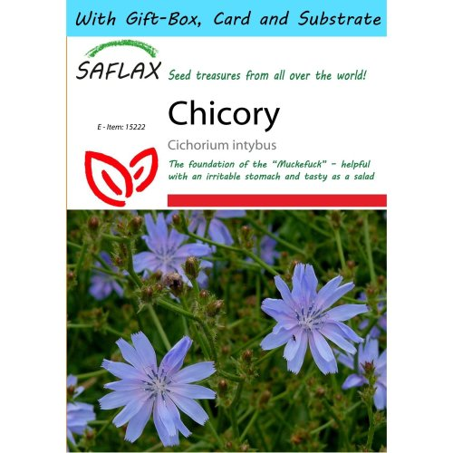 Saflax Gift Set - Chicory  - Cichorium Intybus - 250 Seeds - with Gift Box, Card, Label and Potting Substrate