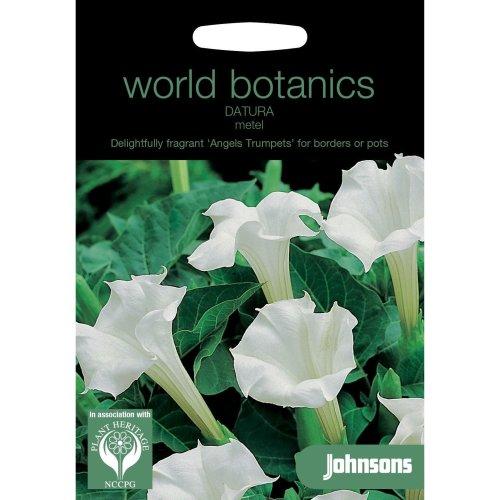 Johnsons World Botanics Flower - Pictorial Pack - Datura metel - 40 Seeds