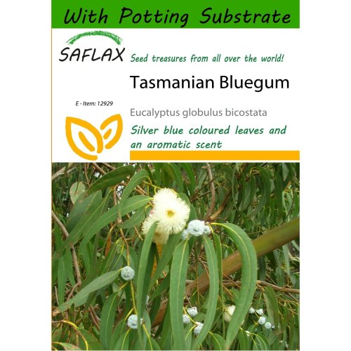 Saflax  - Tasmanian Bluegum - Eucalyptus Globulus Bicostata - 100 Seeds - with Potting Substrate for Better Cultivation